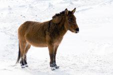 Wild Burro In The Winter Stock Photo