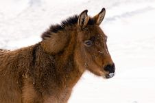 Free Wild Burro In The Winter Stock Images - 18111884