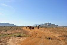 Free Elephant Africa Stock Photography - 18113662