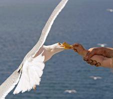 Free Child Feeding Gull Royalty Free Stock Image - 18115676