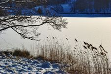 Free Winter Scene Of Branches And Reeds Royalty Free Stock Images - 18116269
