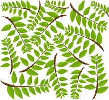 Free Leaf Background Stock Photo - 18117050