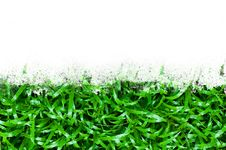 Free Green Grass Stock Photo - 18118330