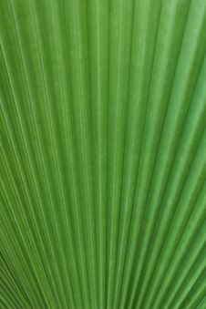 Free Green Palm Tree Leaf Stock Photography - 18118872