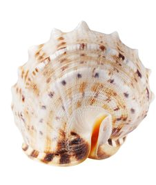 Free Seashell Stock Images - 18119134