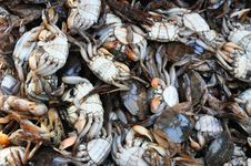 Free Salty Crab Royalty Free Stock Photo - 18119205