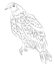 Free Sketch Of Eagle Stock Photos - 18119253