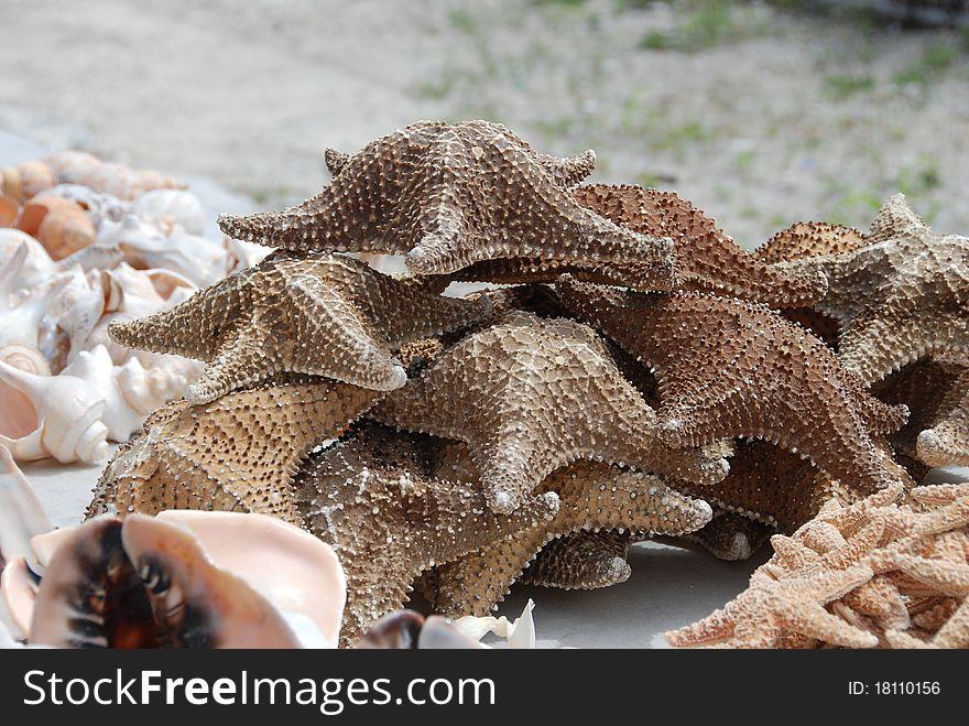 Dried starfish
