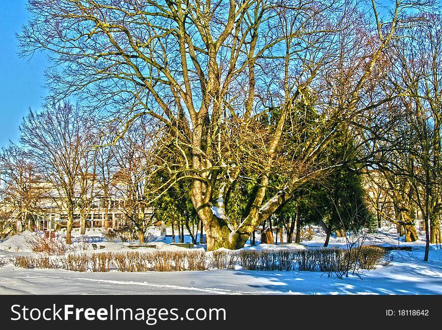 Sunny winter park