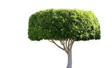 Free Tree Stock Image - 18120171