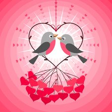 Love Birds Stock Photos