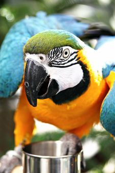 Free Parrot Close-up Stock Photo - 18127100
