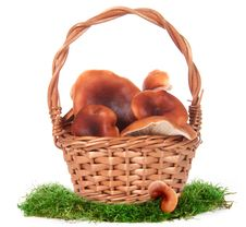 Free The Image Of A Basket With The Mushrooms Stock Photography - 18127302