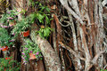 Free Tropical Vegetation Stock Photos - 18133383