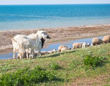 Free Herd Of Goats And Sheep In The Meadow Royalty Free Stock Photos - 18130228