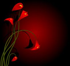 Beautiful Tropical Red Lillies Royalty Free Stock Photography