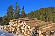 Wood Preparation Royalty Free Stock Image