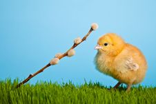 Free Easter Eggs And Chickens On Green Grass And Blue Stock Images - 18138154