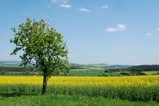 Free Romantic Landscape Royalty Free Stock Photo - 18138645