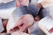 Free Herring Stock Photography - 18139142