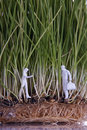 Free Two Human Figures In Wheat Sprouts Stock Photo - 18145830