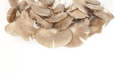 Free Mushroom Royalty Free Stock Photography - 18140207