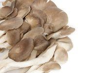 Free Mushroom Royalty Free Stock Image - 18140266