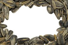 Free Frame Sunflower Seeds Royalty Free Stock Photo - 18141305