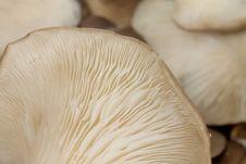 Free Mushroom Stock Photos - 18141533