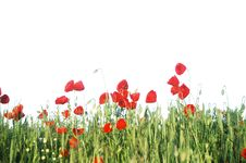 Free Summer Poppy Meadow Royalty Free Stock Image - 18144036