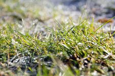 Grass And Dew Stock Photo