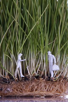 Two Human Figures In Wheat Sprouts Stock Photo