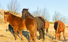 Free Grazing Horses In The Mountain Royalty Free Stock Photo - 18146005