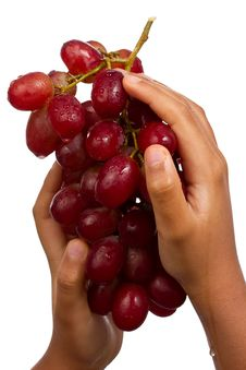 Free Hands Picking Grapes Stock Photos - 18146733