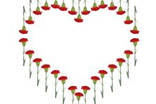 Free Carnations Heart Royalty Free Stock Photos - 18147008