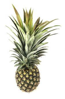 Free Pineapple Royalty Free Stock Photo - 18147755