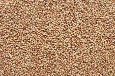 Seeds Of Buckwheat Stock Image
