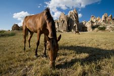 Free Horse On The Mountain Pasture In Cappadocia Stock Image - 18147991