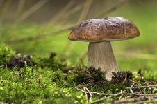 Free Forest Mushroom,cep,boletus Royalty Free Stock Photography - 18152347