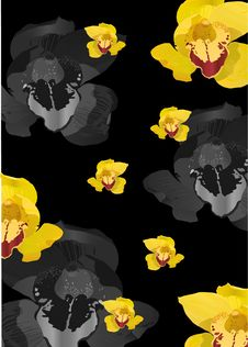 Yellow Orchid Flowers Background Royalty Free Stock Photography