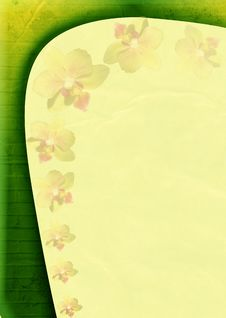 Free Spring Background With Many Orchids Stock Photos - 18152933