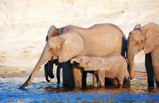 Free Large Herd Of African Elephants Royalty Free Stock Photos - 18155598