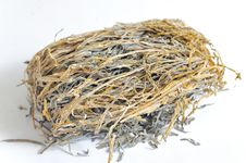 Free Dried Laminaria Royalty Free Stock Image - 18155886