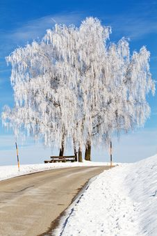 Free Country Road With Birch Tree Stock Photos - 18156283