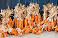 Dry Corn Stock Image