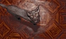 Free Brown Thin Cat On A Wooden Background Stock Image - 18157991