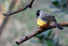 Free Bird Eating Orange Stock Images - 18158474