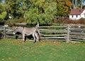 Free Donkey Royalty Free Stock Photo - 18162885