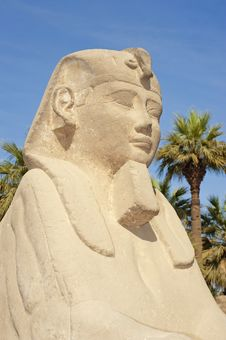 Free Small Spinxes At Luxor Temple Royalty Free Stock Images - 18161099