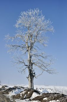 Free Frost Branches Stock Photos - 18161273